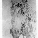 الخيول العربيه