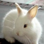 ارنب Size:24.3 Kb Dim: 404 x 355