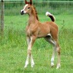 حصان عجيب