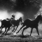خيول روعه