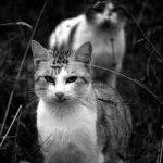 الحيوانات الأليفة11