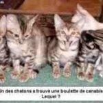 الحيوانات الأليفة4