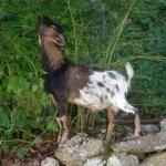 الحيوانات الأليفة5