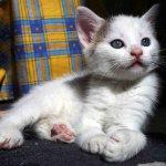 cat14