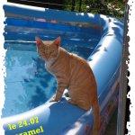 الحيوانات الأليفة14