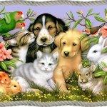 الحيوانات الأليفة15