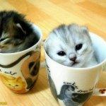 اين تختبأ القطط ..!1