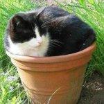 اين تختبأ القطط ..!2