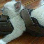 اين تختبأ القطط ..!4