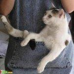 اين تختبأ القطط ..!5