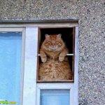 اين تختبأ القطط ..!9