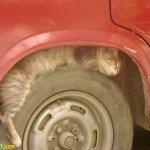اين تختبأ القطط ..!10