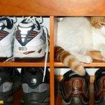 اين تختبأ القطط ..!11