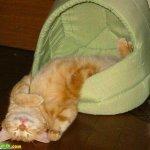 اين تختبأ القطط ..!12
