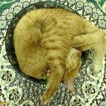 اين تختبأ القطط ..!13