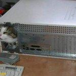 اين تختبأ القطط ..!14