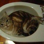 اين تختبأ القطط ..!15