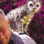 القطط والتلوين1