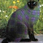 القطط والتلوين2