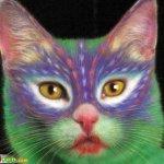 القطط والتلوين5