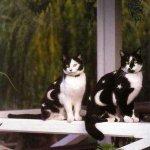 القطط والتلوين6