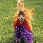 القطط والتلوين7