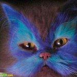 القطط والتلوين10