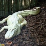 اغرب حيوانت بيضاء في العالم3