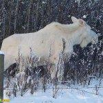 اغرب حيوانت بيضاء في العالم10