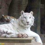 اغرب حيوانت بيضاء في العالم13