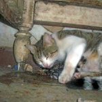 شاهد ولادة القطط بالصور 1