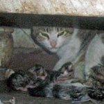 شاهد ولادة القطط بالصور 2