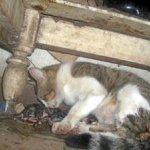 شاهد ولادة القطط بالصور 3