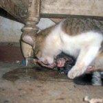 شاهد ولادة القطط بالصور 4