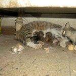 شاهد ولادة القطط بالصور 5