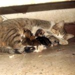 شاهد ولادة القطط بالصور 6