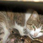 شاهد ولادة القطط بالصور 7