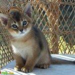اجمل مجموعة من الصور للقطط 1