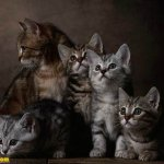 اجمل مجموعة من الصور للقطط 2