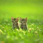اجمل مجموعة من الصور للقطط 3