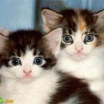 اجمل مجموعة من الصور للقطط 4 Size:30.70 Kb Dim: 446 x 335