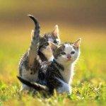 اجمل مجموعة من الصور للقطط 6