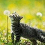 اجمل مجموعة من الصور للقطط 8