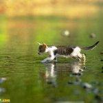 اجمل مجموعة من الصور للقطط 12