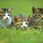 اجمل مجموعة من الصور للقطط 13
