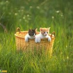 اجمل مجموعة من الصور للقطط 15 Size:49.60 Kb Dim: 500 x 375