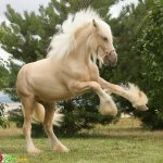 صور احصنه عجيبه 7