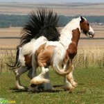 صور احصنه عجيبه 8