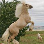 صور احصنه عجيبه 11