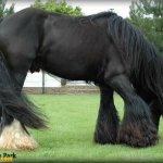صور احصنه عجيبه 13